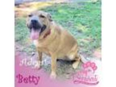 Adopt Betty a German Shepherd Dog, Labrador Retriever