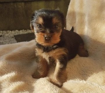 Craigslist Dogs For Adoption Classified Ads In Charlotte Michigan