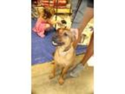 Adopt Pecan a Red/Golden/Orange/Chestnut Labrador Retriever / Mixed dog in Von