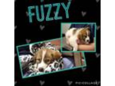 Adopt Fuzzy a White Great Pyrenees dog in Dickson, TN (25278147)