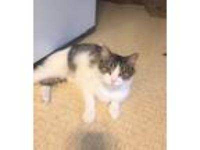 Adopt PrettyFaceCP a Brown Tabby Domestic Longhair (long coat) cat in Carlisle