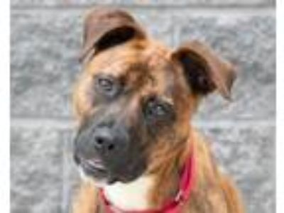 Adopt PIPER a Shepherd, Mixed Breed
