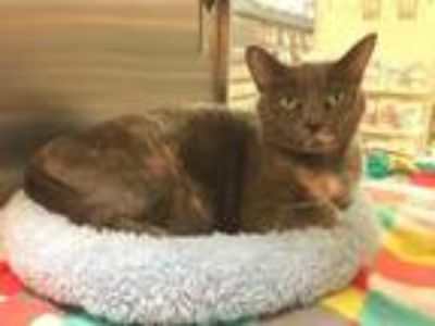 Adopt RENLY a Domestic Shorthair / Mixed (short coat) cat in Capshaw