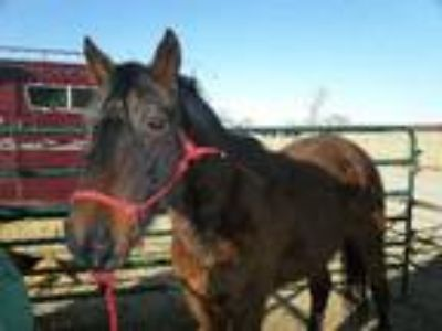 Adopt Blaze (fostered in Black Forest 2/5 365) a Mustang