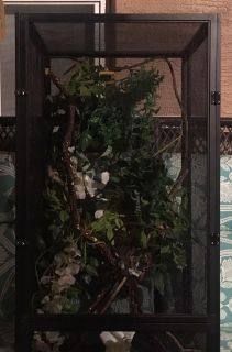 Zoo med reptile enclosure with vines