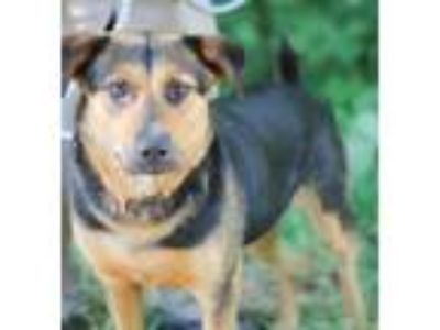 Adopt Marriet a Shepherd