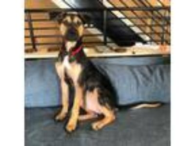 Dogs for Adoption Classified Ads near Kingsport, Tennessee - Claz org