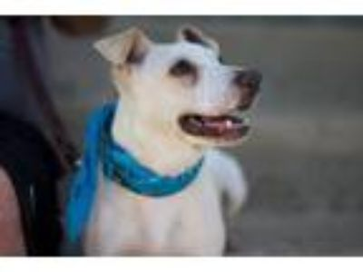Adopt Chevy a Terrier