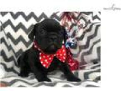 Bulldog - Virginia Beach Classifieds - Claz org