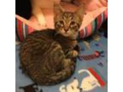 Craigslist - Animals and Pets for Adoption Classified Ads in Frazee