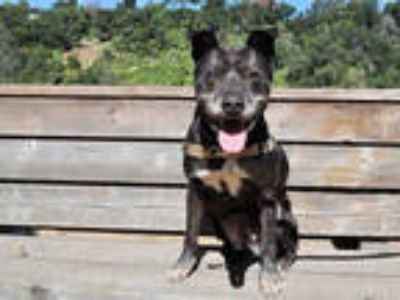Adopt DORIS a Black Labrador Retriever / Mixed dog in Pasadena, CA (25191990)