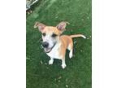 Adopt Bunny a White Mixed Breed (Medium) / Mixed dog in Beaumont, TX (25247509)