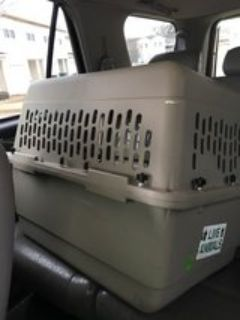 Airline approved Dog Kennel