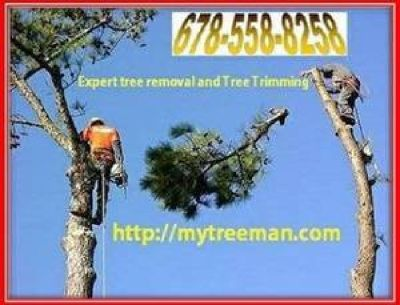 678-558-8258 Mytreeman.com Tree Removal Tree Service STORM DAMAGE TREES BROKEN BRANCH REMOVAL