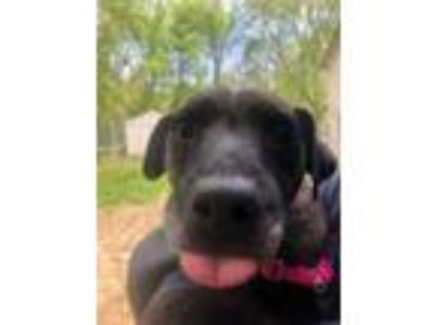 Adopt Lola a Brindle Terrier (Unknown Type, Small) / Mixed dog in Glenville