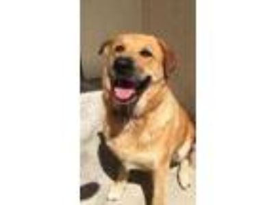 Adopt Zoey a Tan/Yellow/Fawn German Shepherd Dog / Mixed dog in New Smyrna