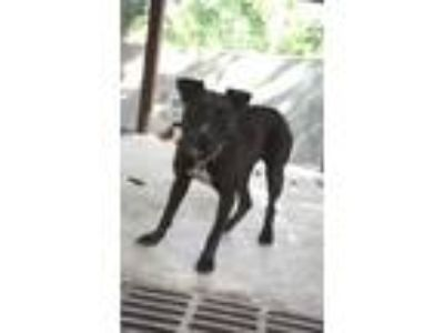 Adopt FIONA a Black Terrier (Unknown Type, Small) / Mixed dog in St.
