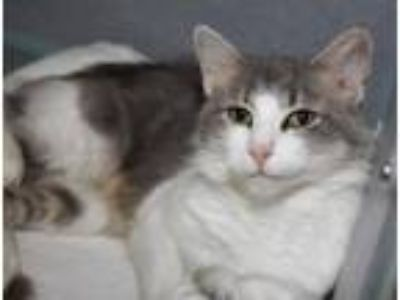Adopt Spectacular Lady Jane - THERAPY CAT LOVES KIDS! - check out my video!