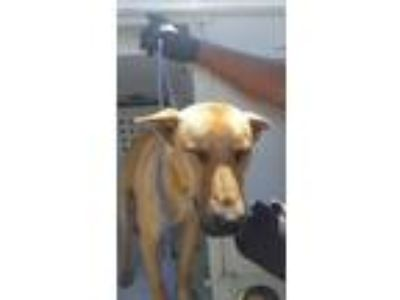 Adopt Willy a German Shepherd Dog, Mixed Breed