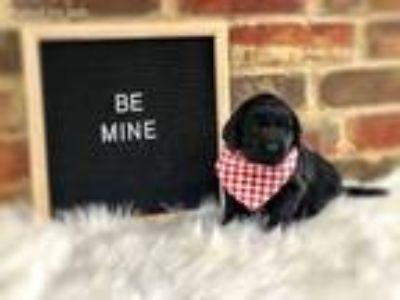Amarillo Texas Craigslist Pets