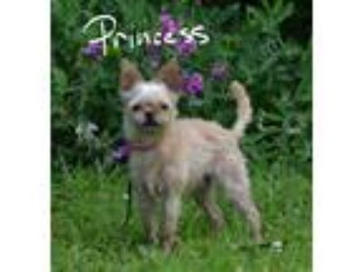 Adopt Princess a Tan/Yellow/Fawn Terrier (Unknown Type, Small) / Mixed dog in