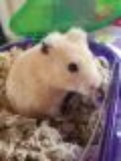 Benbrook~ Twinkle Hamster Small & Furry
