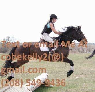 Talented Athletic Friesian/Dutch WB Dressage or Eventing Prospect.