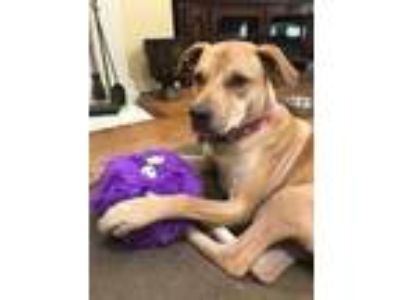 Adopt Rosa a Tan/Yellow/Fawn Labrador Retriever / Mixed dog in Justin