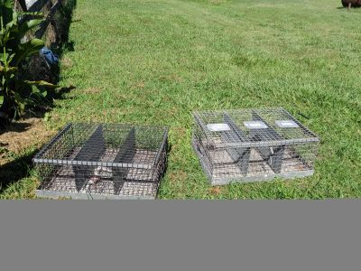 Rabbit/Small animal carrier. Perfect for Fair!! 3 petitions/cage. $20 each or $40 for the pair.