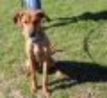 Dyno Terrier Dog