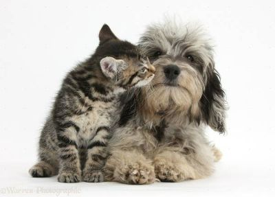 FurryTalez Pet-sitting  Quality Pet Care  Reasonable Rates  (Victoria and area)