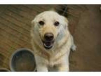 Adopt Jack a Jindo, Terrier