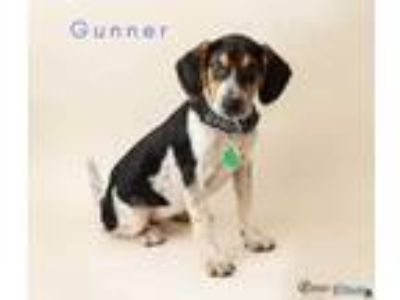 Adopt Gunner a Black Beagle / Mixed dog in Fairhope, AL (25259301)