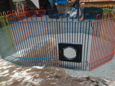 Small rodent play pen