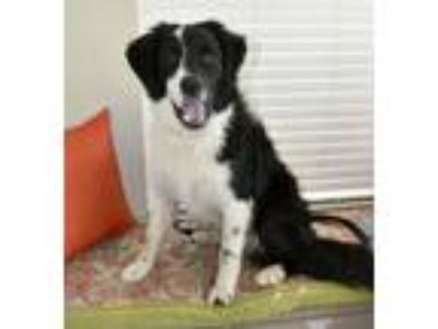 Adopt Buddy Cave a Border Collie