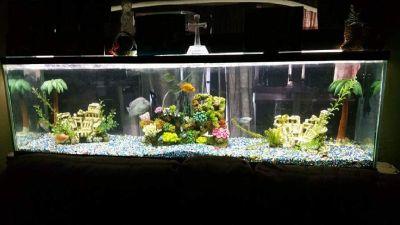 250 gallon aquarium
