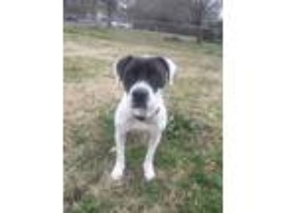 Adopt Ellie Mae a Mixed Breed