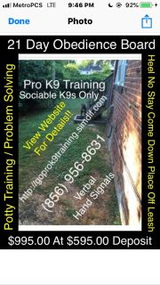 Professional dog and puppy training big or small