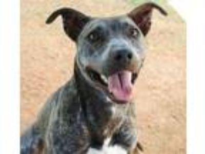 Adopt WINNIE THE POOCH a Brindle - with White Feist / Mixed dog in Grovetown