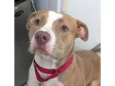 Adopt Pretty Baby a Mixed Breed