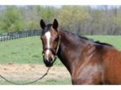 Adopt Justa Rollin' On a Thoroughbred