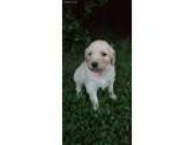 Craigslist - Animals and Pets for Adoption Classifieds in Madison