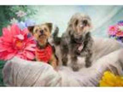 Craigslist - Dogs for Adoption Classifieds in Dover