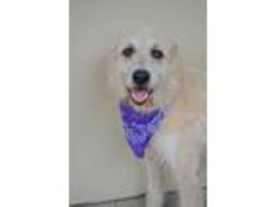 Adopt Tarly a White Terrier (Unknown Type, Medium) / Mixed dog in McKinney