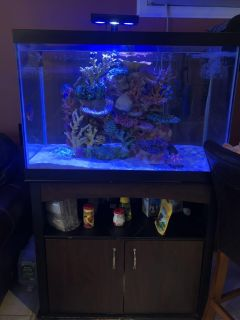65 gallon fish tank and base with filter
