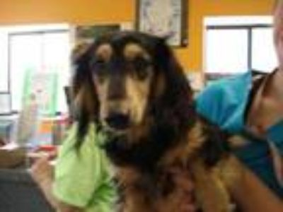 Adopt Stray/Orange Ave Boat Ramp/Avail 5/11 a Black Dachshund / Mixed dog in
