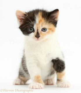 Looking for calico or just a kitten