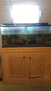 90 gallon aquarium with accessories