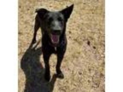 Craigslist Animals And Pets For Adoption Classified Ads In Cheyenne Wyoming Claz Org The population was 65,165 at the time of the 2020 u.s. claz org