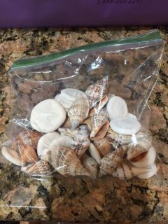 Craft seashells & package of shell stickers
